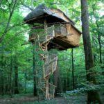 Cabane escarcelle dans la forêt
