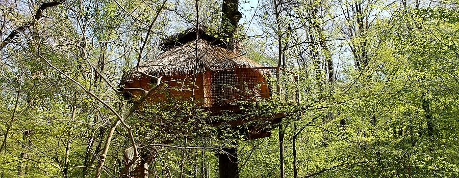 Cabanes perchées à 8 mètres de hauteur, dans les arbres en forêt